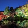 京都旅行記⑤高台寺