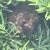 豊橋市で垣根の中にできたスズメバチの巣を駆除してきました!