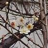 春はそこまで🌸🎵