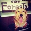 ■Cafe ForesTa   大切な日の為お休みです■