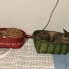 ⑱のら猫えんちゃんばんちゃん日記