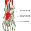 足背動脈触知の方法とその意義