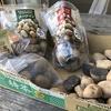 ジャガイモを植えたことと江戸川CRで「うさんぽ」に癒されたこと