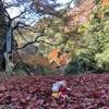 紅葉狩り〜神護寺