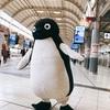 【足立佑介くんちゃん】ペンギン in 品川
