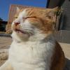 冬の晴天と猫用シェルター