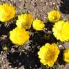 立春後の早春の花々