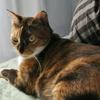 猫トイレジプシー、再び。