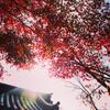 旅好きのお気に入りの写真。京都編