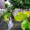 日本遺産「伊庭の水郷」