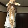 P8【保護猫日記】我が家の可愛いシンバちゃん!