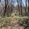 土の上を走る「藻岩山」