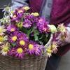 花とばあちゃん