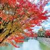 京都の紅葉2020