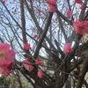 近づく春!