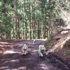 黒伏山の伏流水  男水への林道の雪がほぼ融け、倒木処理も終り、水源地が御所山から黒伏山に戻ります