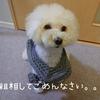 ~愛犬の粗相の原因について~