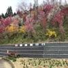 花やしき公園(福島市飯野町)〜色とりどりの花が堪能できる福島市の桃源郷