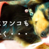 犬も急な寒さにご注意を 犬の腰痛、関節痛、お腹のトラブル