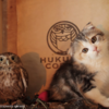 有名な猫カフェ!大阪の「フクロウコーヒー」の看板ネコ、マリモの今の姿と過去の姿を比較