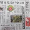 新聞に「師弟椿」が!