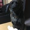 甲斐犬サン、反省する……|壁|'Д'lll)ァ゛。。ゴメンナサィ・・。