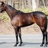 【POG】秋華賞馬アヴェンチュラの初子・デサフィアンテは両親譲りの良質なバネ
