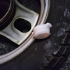 #バイク屋の日常 #ホンダ #スーパーディオ #AF27 #スピードメーターギア #品番
