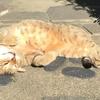 魂を抜かれた猫【のら猫テル坊日記その1】