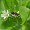 花より昆虫