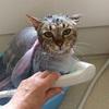 またお風呂に入れたわけ ~野猫との交わり~