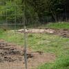 良い天気が続いたおかげで、耕しやすいです