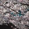 NODA・MAP『贋作 桜の森の満開の下』再び❗~WOWWOW
