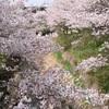 春を満喫!小枝ストーブで楽しむお花見