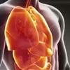 人体で最大の新しい器官