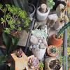 秋の我が家の中の植物たち