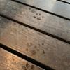 謎の足跡🐾