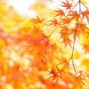 ついに過ごしやすい時期スタート!秋の良さをまとめてみた!(ついでに今後の事も)