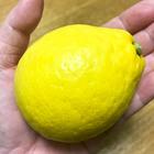 【ウマ酸っぱ〜い】男の「塩レモン鍋」の作りかた【絶品】