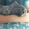 子猫の急性胃腸炎〜嘔吐がとまらない①〜