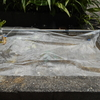 花壇除草とミヤマオダマキ花壇被害対策
