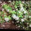 ダルメインの庭とハンバーグ
