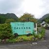 イワタバコ 加江田渓谷の遊歩道にいっぱい