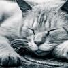 睡眠不足は未来のパフォーマンスを下げる。電子レンジと仲直りがしたいです。