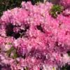 春爛漫、中央地区の花!その3