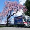 桜が満開!春らんまんですよ