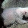 パンダの赤ちゃん、メスと判明…上野動物園発表