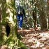 初冬の尾根歩き。南紀・大塔山に登ってきた(和歌山県東牟婁郡古座川町)