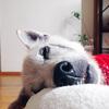 元気に長生きが一番、老犬の痴呆防止対策とは