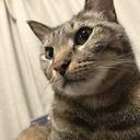 猫好きな家庭教師の日記